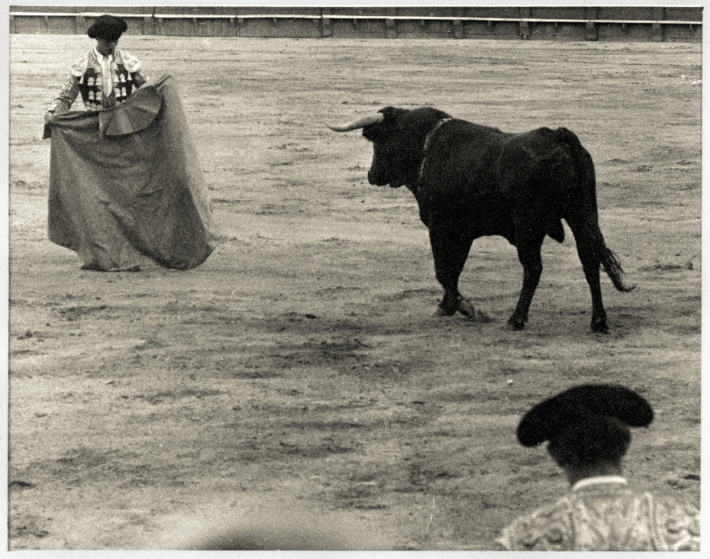 BullFight001Web