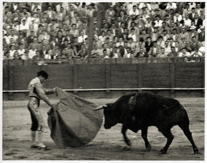 BullFight002Web