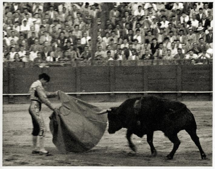 BullFight002Web